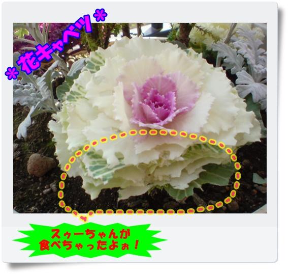 20100127154631.jpg