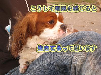 IMG_01100004のコピー