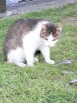 20090531猫
