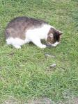 20090531猫1