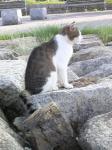 20090531猫3