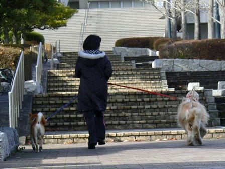 楽しくお散歩!