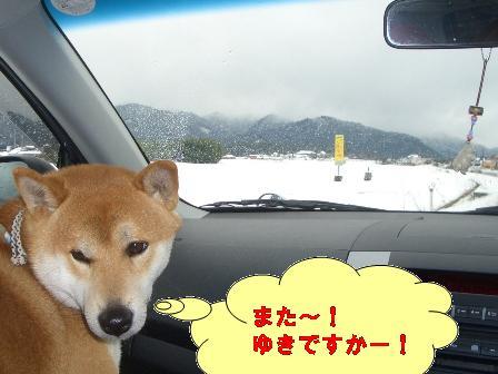 雪・・・ですか!