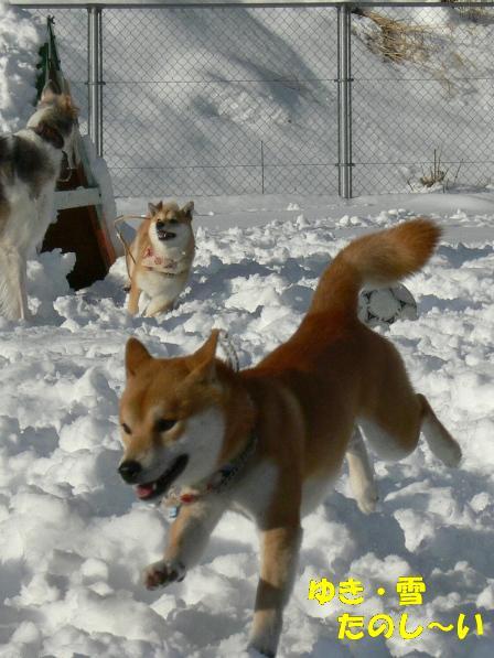 雪ラン楽しい!