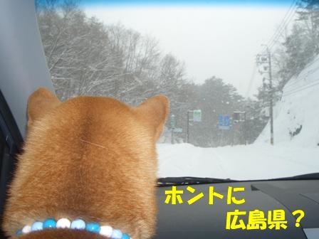 ここは雪国?