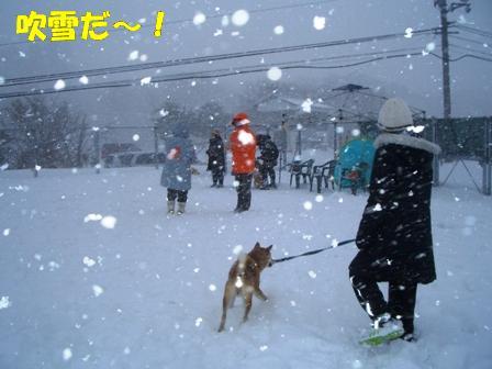 吹雪だ~!