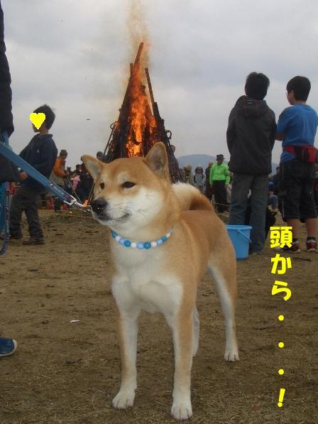 燃えてるよ!