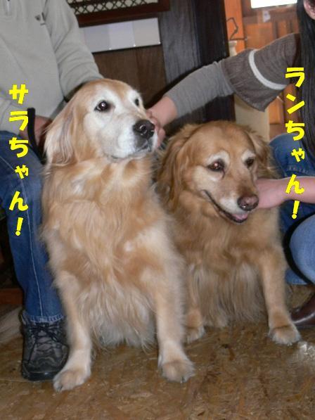 ランちゃん&サラちゃん