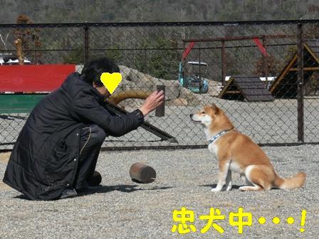忠犬中・・・