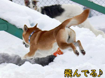 飛んでる~~!