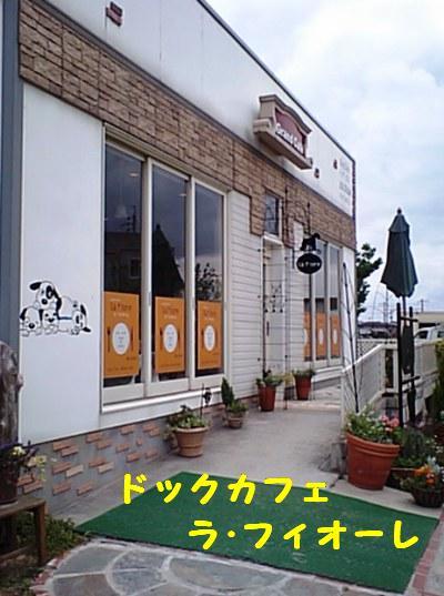 ドックカフェ