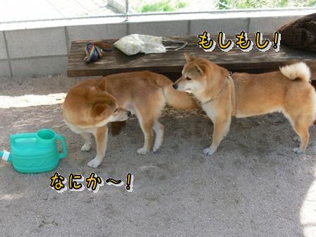 何か~~!