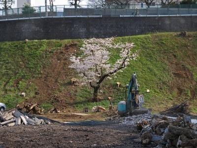 桜工事中_convert_20120414202952