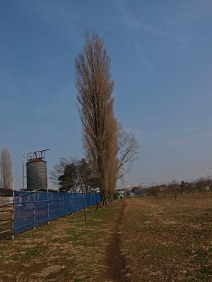 田無農場1_convert_20120422001705
