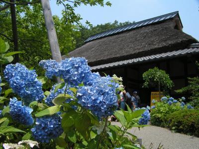 shouwamura0007s.jpg