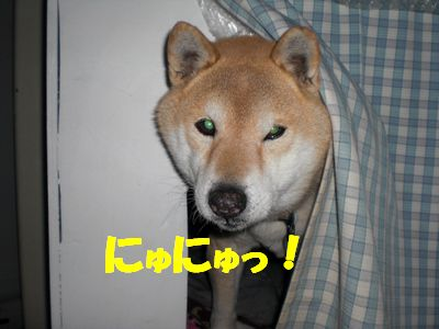 CIMG0759_20110214090748.jpg
