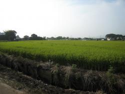 旧桜村の田園風景