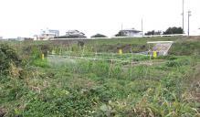 g-muromigawa-6.jpg