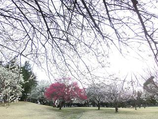 梅園公園1