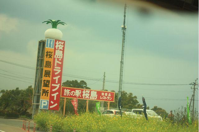 桜島だいこん