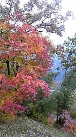 埼玉県城峯公園3