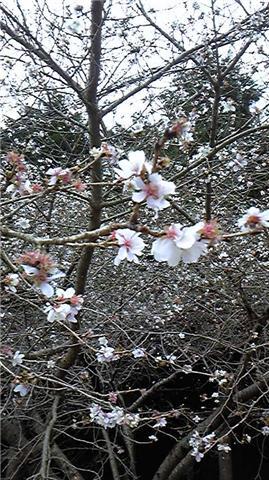 埼玉県桜山公園jpg