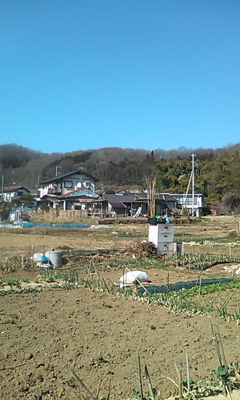 2月26日畑_01