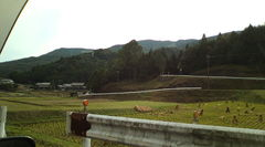 黄柳野高校 新城