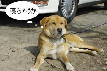 ゴン_IGP4733