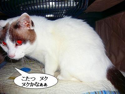 211008冬支度 (1)