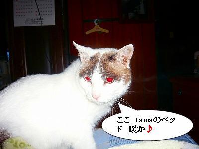 211008冬支度 (2)