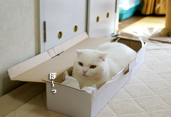 箱がよかったのねタマさんコピー