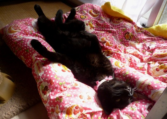 くーちゃんこんな格好で寝てる。3