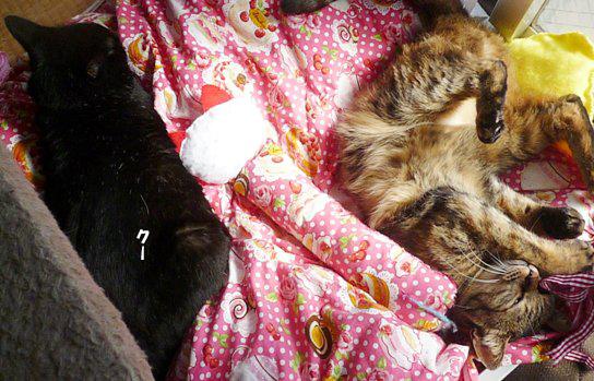 くーちゃんとキララが一緒に寝てる04のコピー