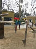 2009 1 17 千葉市動物公園 095_R
