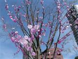 2009  3 29 HIGHクラス 遠足 024_R