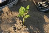 2009 あいを育てるプロジェクト 植え替え 032_R