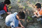 2009 あいを育てるプロジェクト 栄養あげ 012_R