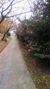 椿の並木道