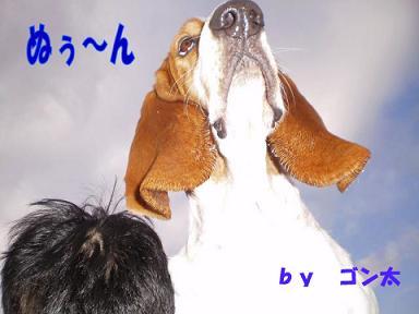 コピー-~-PC140013