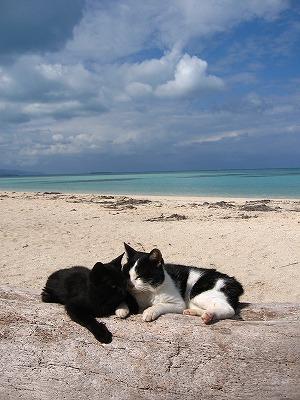 海辺の二人。
