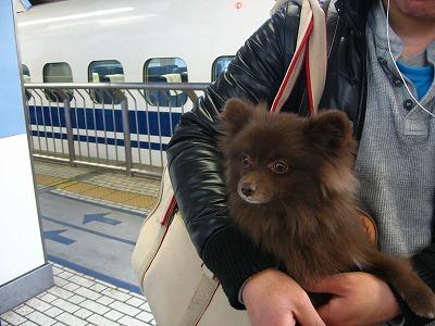 東京駅ホームにて。
