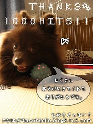 1000HIT御礼!!゜+。:.゜ヽ(*´▽`)ノ゜.:。+
