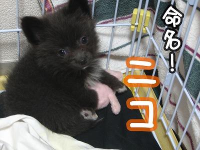 ニコをよろしくお願いします!