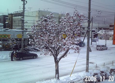 20081120nanakamado.jpg