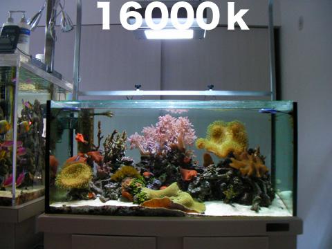 2009022016000.jpg