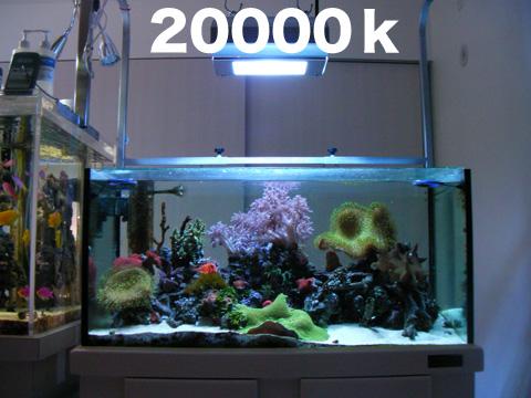 2009022020000.jpg