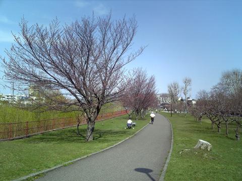 20090429sakura0.jpg
