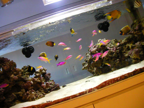 20090625fish1800.jpg