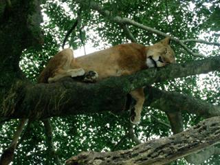 木の上でうとうと。
